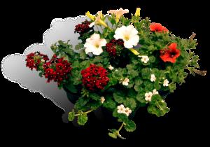 tuinplanten-lente-perkpl.10.5cm-mix-productfoto_SHADOW