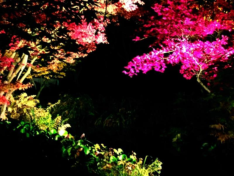 chrysanthemum show castle gardens arcen